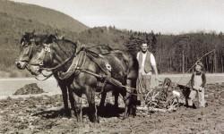 Pferdepflug 50er-Jahre